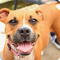 Adopt A Pet :: Khaleesi - Brentwood, TN