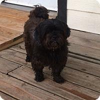Adopt A Pet :: Hendricks - San Antonio, TX