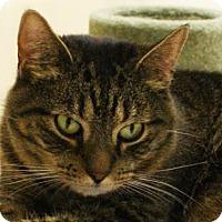 Adopt A Pet :: Kyah - Morgan Hill, CA