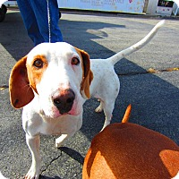 Adopt A Pet :: Luke - Alexandria, VA