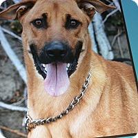 Adopt A Pet :: ANDY VON ALSBERG - Los Angeles, CA