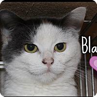 Adopt A Pet :: Blanket (POM-KS) - Allentown, PA