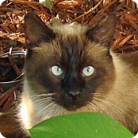 Adopt A Pet :: Cocoa - Greenfield, IN