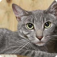 Adopt A Pet :: Sebastian - Odessa, FL