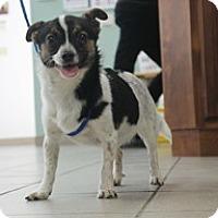 Adopt A Pet :: Maisy - Jamestown, CA