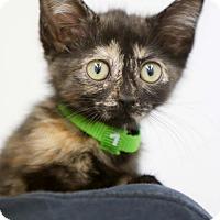Adopt A Pet :: Clara - Plano, TX