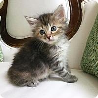 Adopt A Pet :: Tatiana - Austin, TX