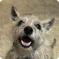 Adopt A Pet :: Banjo - Waco, TX