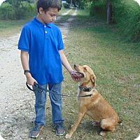 Adopt A Pet :: Pal - Seattle, WA