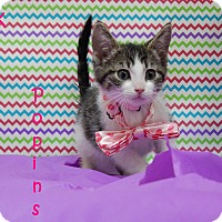 Adopt A Pet :: Kitty Poppins - Bucyrus, OH