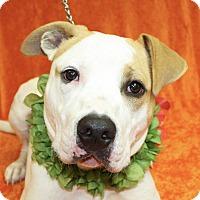 Adopt A Pet :: Tahoe - Jackson, MI