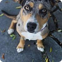 Adopt A Pet :: Rocky Road - Salt Lake City, UT