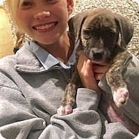Adopt A Pet :: Gabby - Eden Prairie, MN