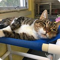 Adopt A Pet :: Izzy - Jackson, NJ