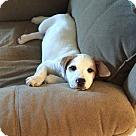 Adopt A Pet :: Daisy - Adoption Pending