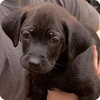 Adopt A Pet :: Betty - Wichita, KS