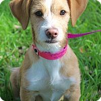 Adopt A Pet :: ALEXA - Jacksonville, FL