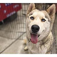 Adopt A Pet :: Tigger - Pacific Grove, CA