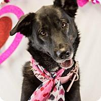 Adopt A Pet :: Nala - Scarborough, ME