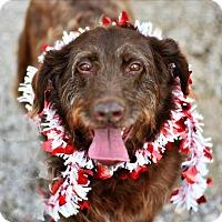 Adopt A Pet :: Isabeau - Cleveland, TN