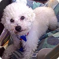 Adopt A Pet :: Barry - san diego, CA