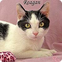 Adopt A Pet :: Reagan - St Louis, MO