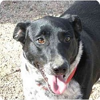 Adopt A Pet :: Maggie - Greeley, CO