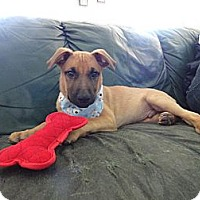 Adopt A Pet :: CHARLIE - Malibu, CA