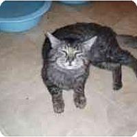 Adopt A Pet :: Mr. Magstick - Hamburg, NY