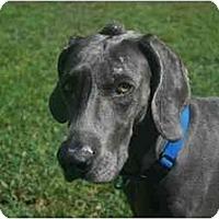 Adopt A Pet :: Darbi - Eustis, FL
