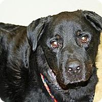 Adopt A Pet :: Nitro - Racine, WI