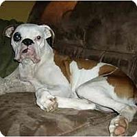 Adopt A Pet :: Milkshake - Tallahassee, FL