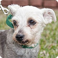 Adopt A Pet :: Gretel - Houston, TX