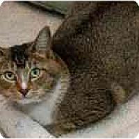 Adopt A Pet :: Rosalie - Marietta, GA