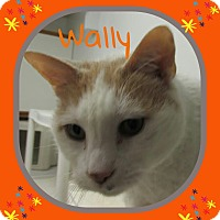 Adopt A Pet :: Wally - Princeton, WV