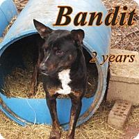 Adopt A Pet :: Bandit - Boaz, AL