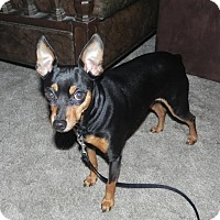 Adopt A Pet :: Jonas - Jacksonville, FL