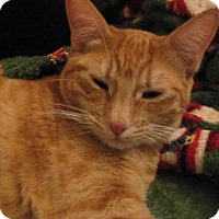 Adopt A Pet :: Honey - Logan, UT