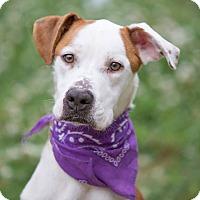 Adopt A Pet :: Rosie - Nashville, TN