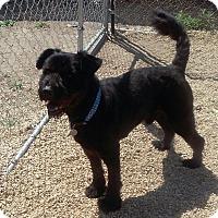 Adopt A Pet :: Reggie - Meridian, ID
