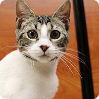 Adopt A Pet :: Bourbon - Greensboro, GA