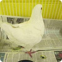 Adopt A Pet :: *ORANGE - Upper Marlboro, MD