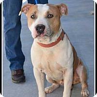 Adopt A Pet :: Skippy - Williamsburg, VA