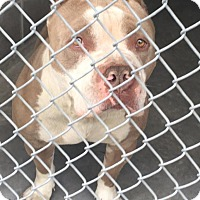 Adopt A Pet :: Takota - Bloomfield, CT
