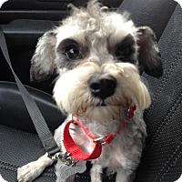 Adopt A Pet :: Toby - Redondo Beach, CA