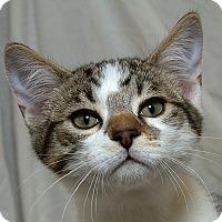 Adopt A Pet :: Bosley N - Sacramento, CA