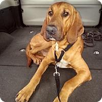 Adopt A Pet :: Monty - Sacramento area, CA