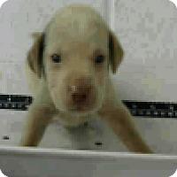Adopt A Pet :: Reid - Fort Collins, CO