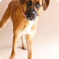 Adopt A Pet :: Gavin - Marietta, GA