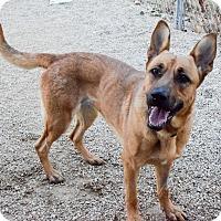 Adopt A Pet :: Laika - Meridian, ID